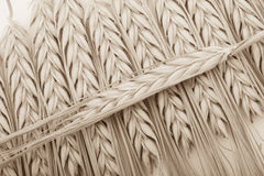 Wheat bundle on table Stock Photos