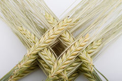 Wheat bundle on table. Wheat ear comb on wooden background table Royalty Free Stock Images