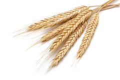 Wheat bundle Royalty Free Stock Photography