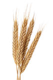 Wheat bundle Royalty Free Stock Photo