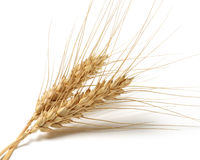 Wheat bundle Stock Photography