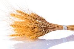 Wheat bundle on white background. Bundle of wheat isolated on white background Royalty Free Stock Photos