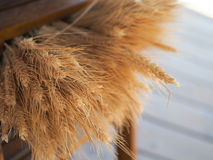 Wheat Bundles. Bundles of wheat on a wooden shelf Stock Photography