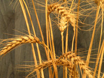 Wheat buqet. In warm light Stock Photos