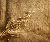 Wheat on burlap. Wheat Ears border on Burlap background.with copy-space royalty free stock photo