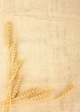 Wheat in burlap Royalty Free Stock Photography