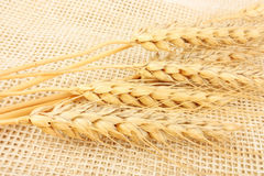 Wheat in burlap Stock Photos