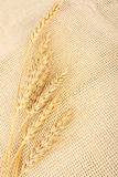 Wheat in burlap Stock Image