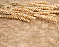 Wheat on a burlap background Royalty Free Stock Photography