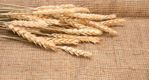 Wheat on a burlap Royalty Free Stock Photos