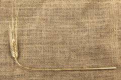 Wheat on a burlap Stock Images