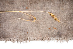 Wheat and burlap fabric. isolated. Wheat and burlap fabric on isolated white background Royalty Free Stock Image