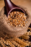 Wheat in burlap sack Royalty Free Stock Image