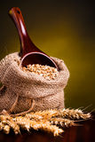 Wheat in burlap sack Stock Photography