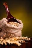 Wheat in burlap sack stock photography