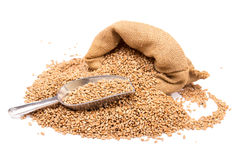 Wheat in a burlap  sack Royalty Free Stock Images