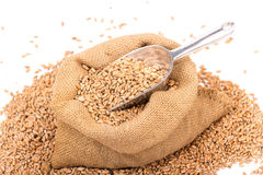 Wheat in a burlap  sack Stock Images