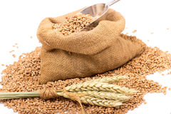 Wheat in a burlap  sack Stock Image