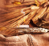 Wheat on canvas Stock Image