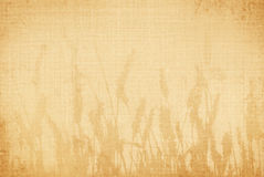 Wheat canvas Royalty Free Stock Photography