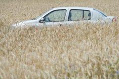 Wheat car Stock Photos