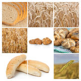 Wheat. Cereal collage Stock Image