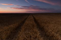 Wheat cereal field ready to harvest in Palencia Royalty Free Stock Image
