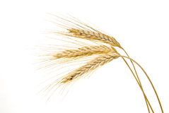 Wheat cereal on white Stock Images
