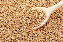 Wheat cereals Royalty Free Stock Photos
