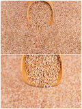Wheat cereals harvest. Collage detail royalty free stock photography