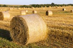 Wheat, close up. Bales of bound straw after receiving grain. photo in the agricultural field in summer. sunny clear day Royalty Free Stock Photos