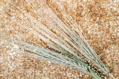 Wheat  close up Stock Image