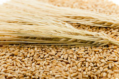 Wheat close up Stock Photography