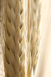 Wheat close up Stock Photo