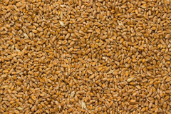 Wheat closeup. Top view Stock Photos