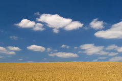 Wheat clouds and blue sky background Royalty Free Stock Images