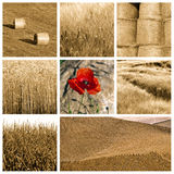 Wheat collage Stock Photos