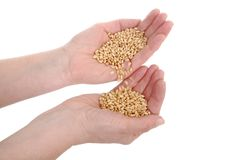 Wheat concept Royalty Free Stock Images