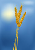 Wheat cones. Agriculture art barley bran Stock Photography