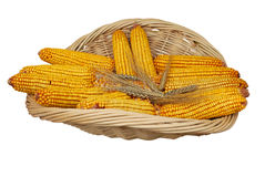 Wheat and corn Stock Photography