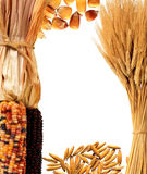 Wheat and corn Stock Photo