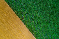 Wheat and corn fields. Top view of fertile land with wheat and corn crops. Abstract image of golden and green fields Stock Photography