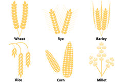 Wheat, corn, rice, barley, millet Royalty Free Stock Photography