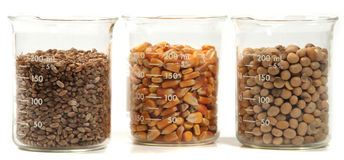 Wheat, corn, soy seeds grain Stock Photos