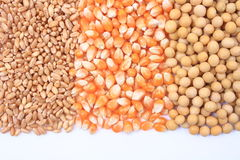 Wheat, corn and soybean Stock Photos