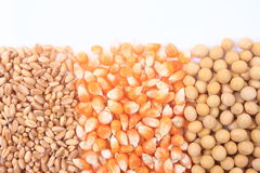 Wheat, corn and soybean Stock Images