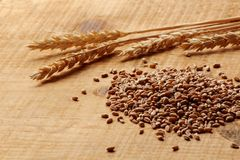 Wheat corn and wheat spike on a wood plank Royalty Free Stock Photos