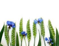 Wheat and cornflower Stock Photo