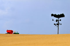 Wheat crop. A field of wheat and tractor stock image
