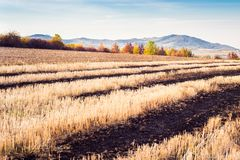 Wheat crop field in autumn. Partially burned crop field in autumn Royalty Free Stock Photography